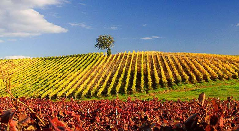 Le Sode di Sant'Angelo: in Corciano, promoting its territory through its wine