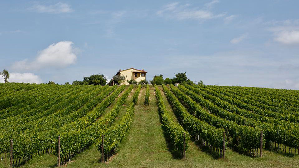 Sode di Sant'Angelo: an eye on the vineyard, a thought for the grape harvest